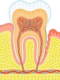 tandvleesontsteking 4